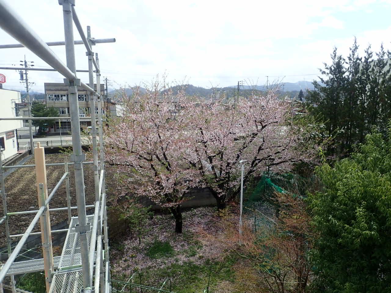 桜,建方,春,家づくり
